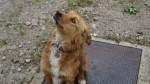 La perra, de cuyo nombre no puedo acordarme