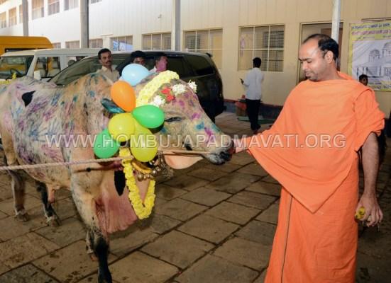Hombuja-Humcha-Jain-Math-Deepawali-Govu-Cow-Pooja-2018-0003