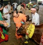 Hombuja-Humcha-Jain-Math-Deepawali-Govu-Cow-Pooja-2018-0005