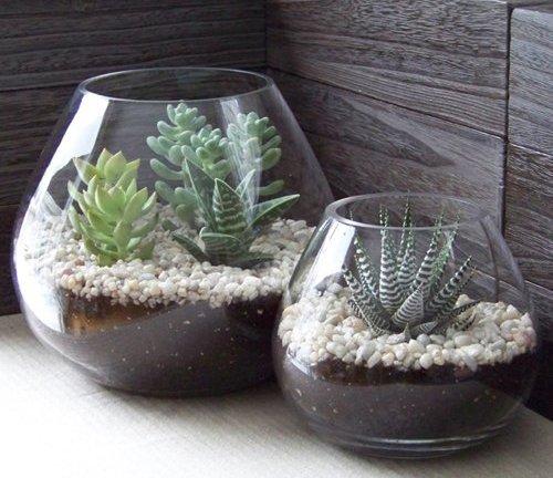 Il terrarium: un angolo verde sotto vetro