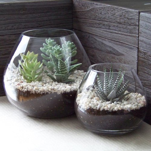 Il terrarium vasi