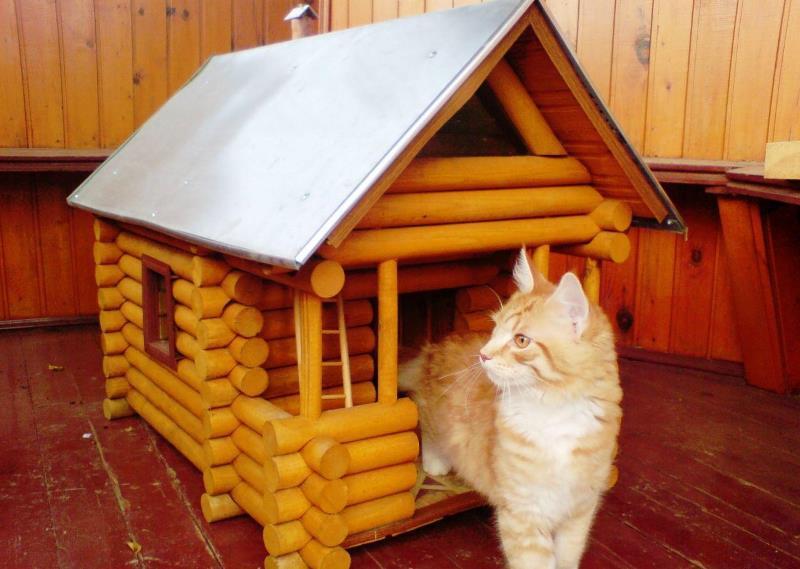 деревьяная изба домик кота
