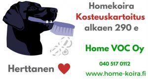 Kokemuksia Homekoira Herttanen hoitaa homeesi kosteuskartoitus Home VOC