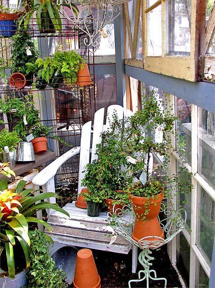 зимний сад декорирование комнатные цветы
