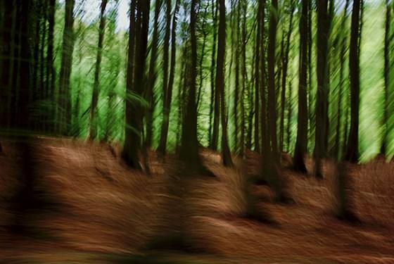 3 Waldwelt