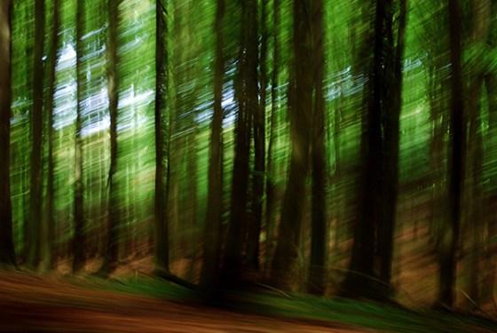 5 Waldwelt