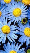 blue flowers for your