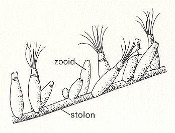 Tectology IV