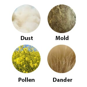 Graphic of Different Allergens