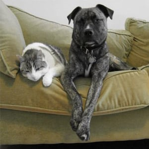 Photo of a Dog and Cat on a Couch