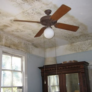 Photo of Mold on a Ceiling