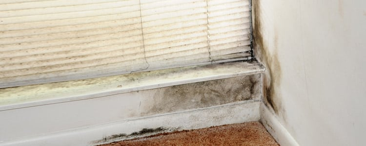 Photo of Mold on Floorboard and Wall