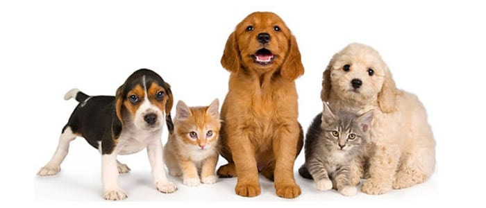 Photo of a Group of Pets