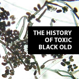 Graphic of the History of Black Mold