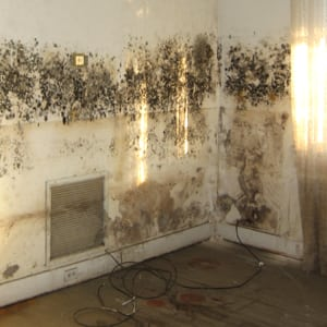 Photo of Mold inside a Room