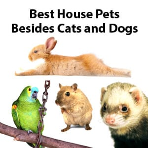 Photo of Small House Pets
