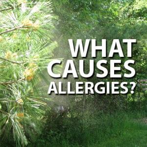 Photo of Pine Tree Pollen
