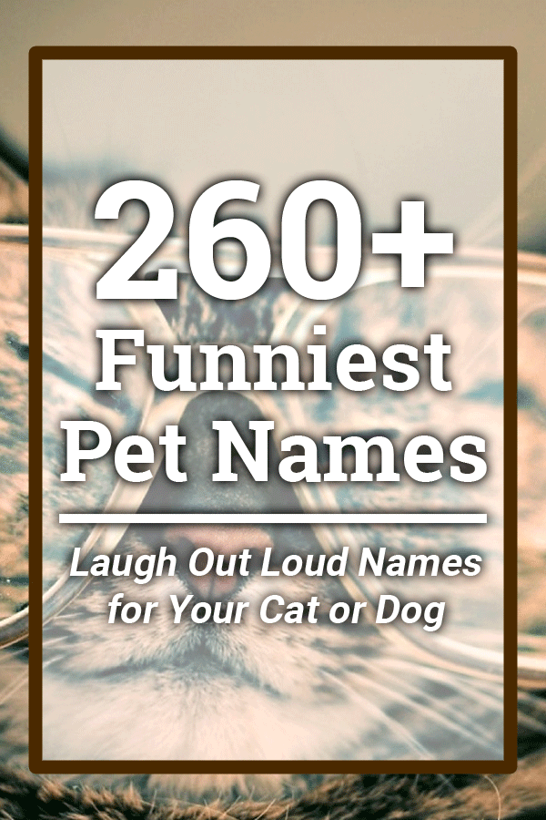 260+ Funniest Pet Names (Hilarious Laugh Out Loud Names for Your Cat or Dog))