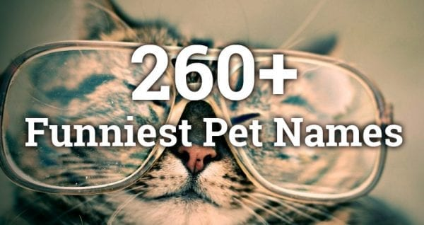 260+ Funniest Pet Names