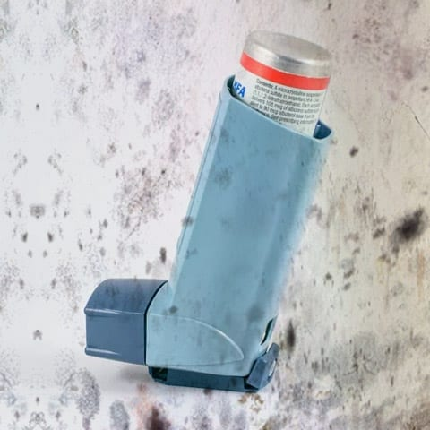 Photo of mold and asthma inhaler