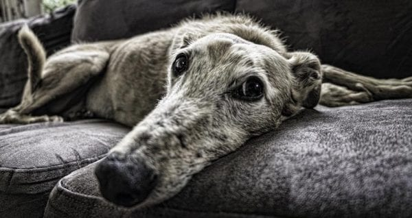 5 Easy Ways for How to Get Rid of Pet Dander