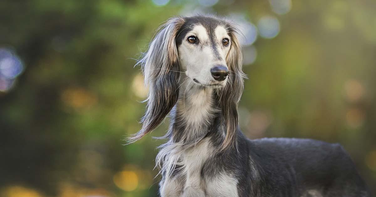 Cleanest Dog Breeds