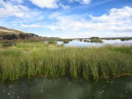 Reeds on Lago Titicaca.