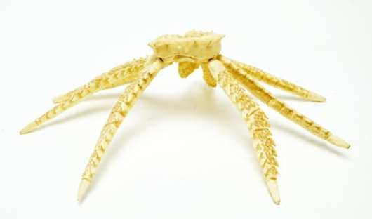 Norbert Thomas Ivory Crab