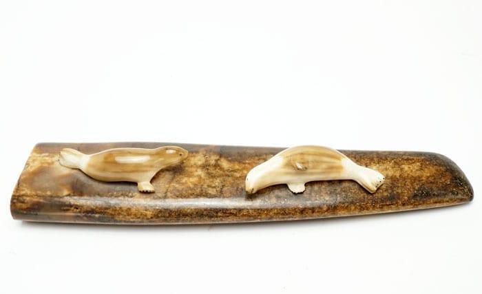 Ivory ice floe seals