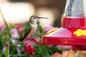 the best hummingbird feeders for your home, garden, and yard
