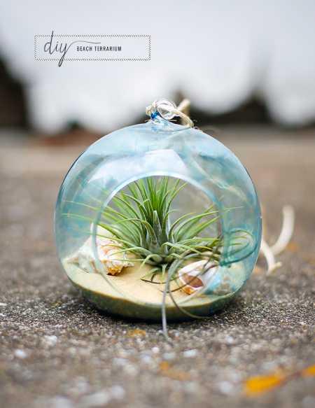 beach-terrarium
