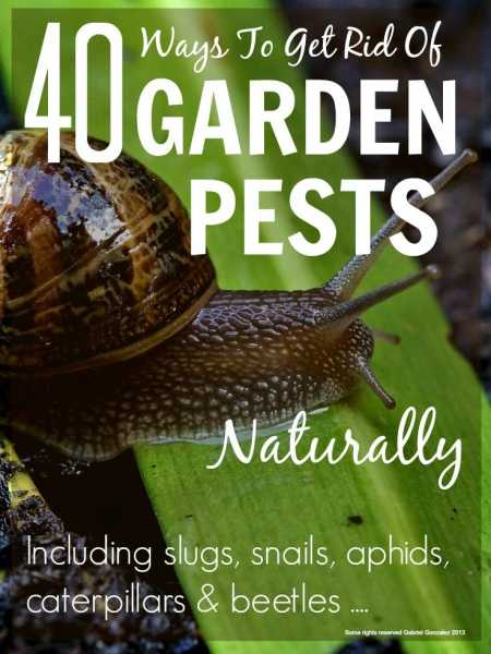 40 Ways To Get Rid Of Garden Pests Naturally Home And Garden