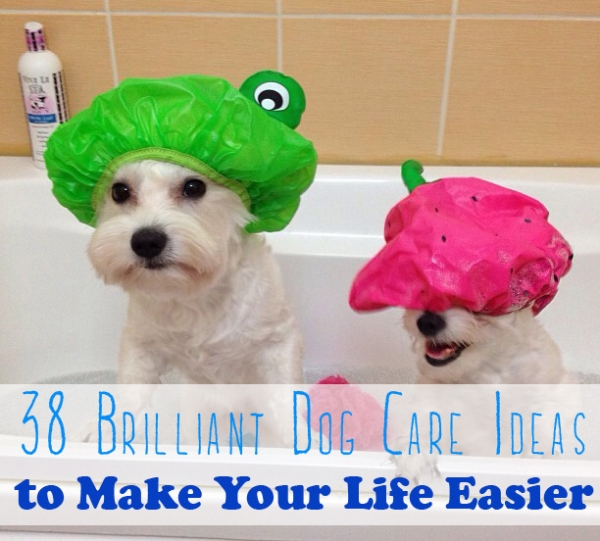 Tips To Help Make Things Easier For You and Your Dog