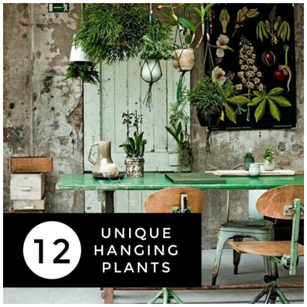 one of the best ways to make your house feel like a home is to bring some plants indoors and have some greenery in your indoor space