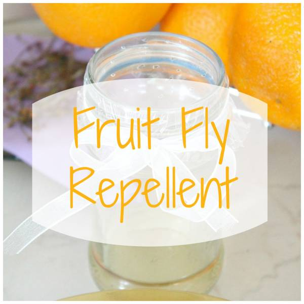 how to make a fruit fly trap edible fruits