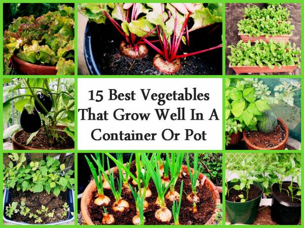 Container gardening what vegetables grow well in a smaller space home and garden - Growing vegetables in small spaces collection ...