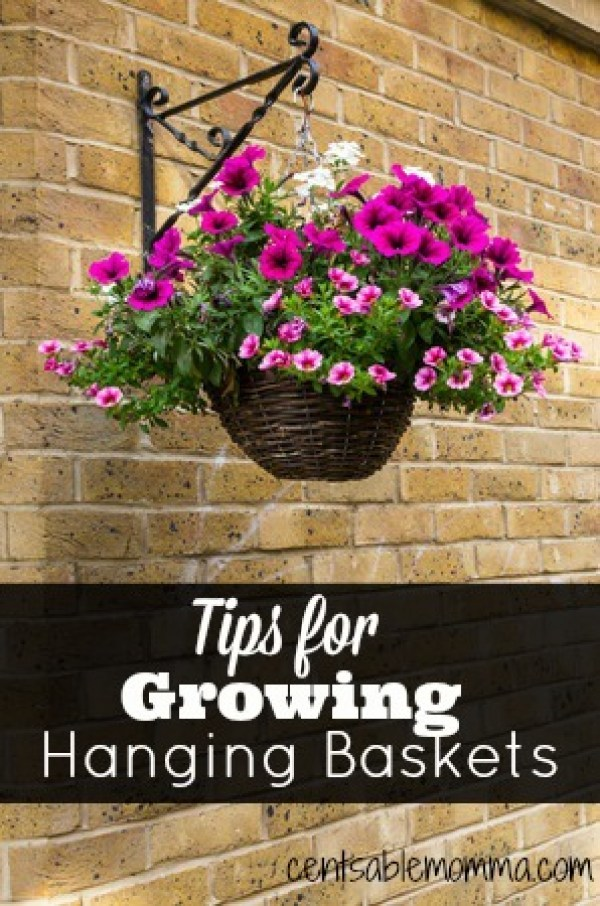 Tips For Growing A Beautiful Hanging Flower Basket Craft