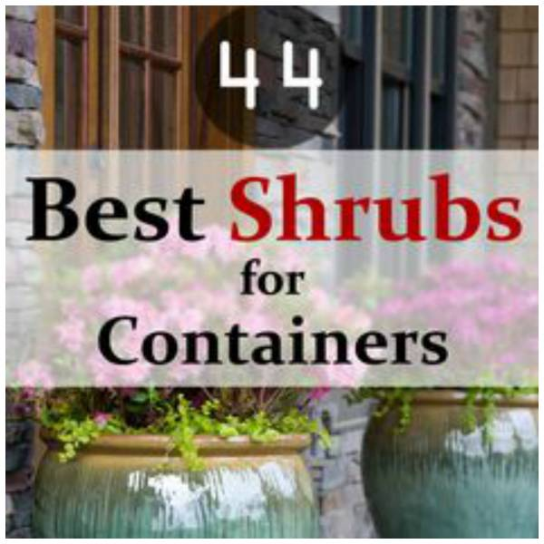 The Best Shrubs To Use For Container Gardening