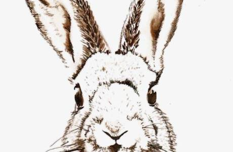Printable Wall Art – Easter Bunny Sketch