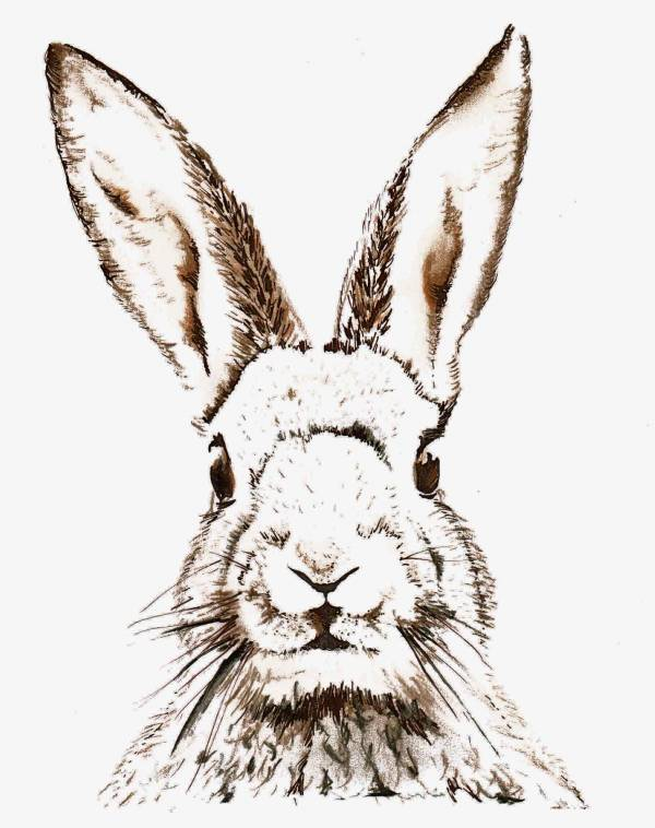 Fabulous I love this hand drawn printable Bunny Perfect for Easter time I plan to pop this one in my hallway in a nice wooden frame