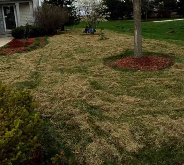 home and garden lawn dethatching