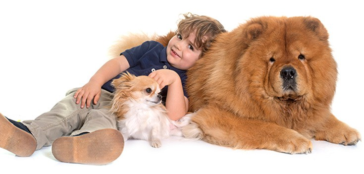 small boy with chow chow and chihuahua