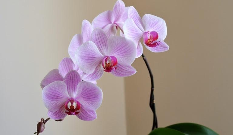Orchideje jako pokojové rostliny