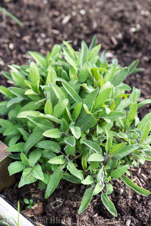 the garden in april home baked bliss rh homebakedbliss com miracle garden in april dubai miracle garden in april