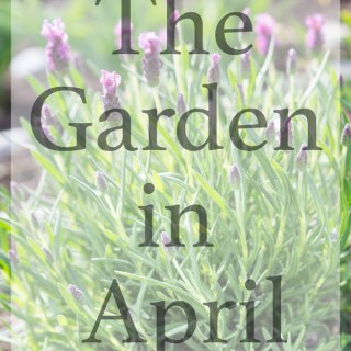 The Garden in April