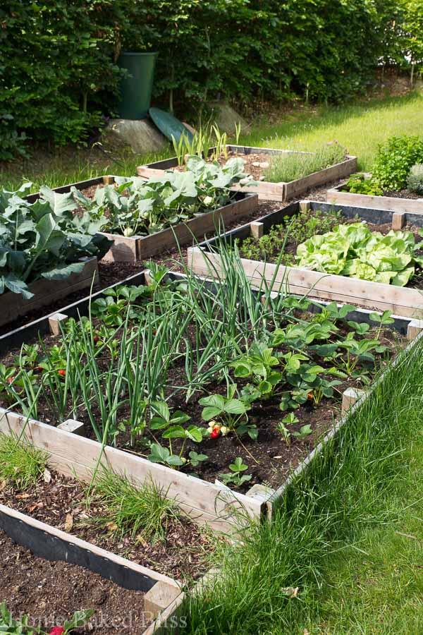 the garden in may, gardening tips