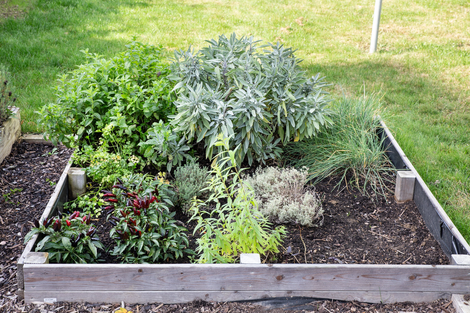 Overview of herb bed