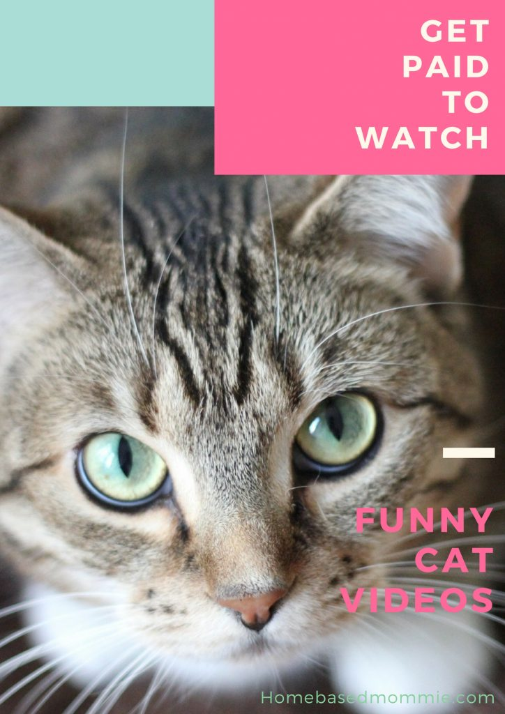 Get Paid To Watch Funny Cat Videos Homebasedmommie