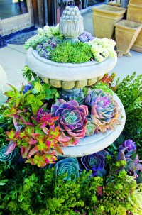 50 Best Succulent Garden Ideas for 2018