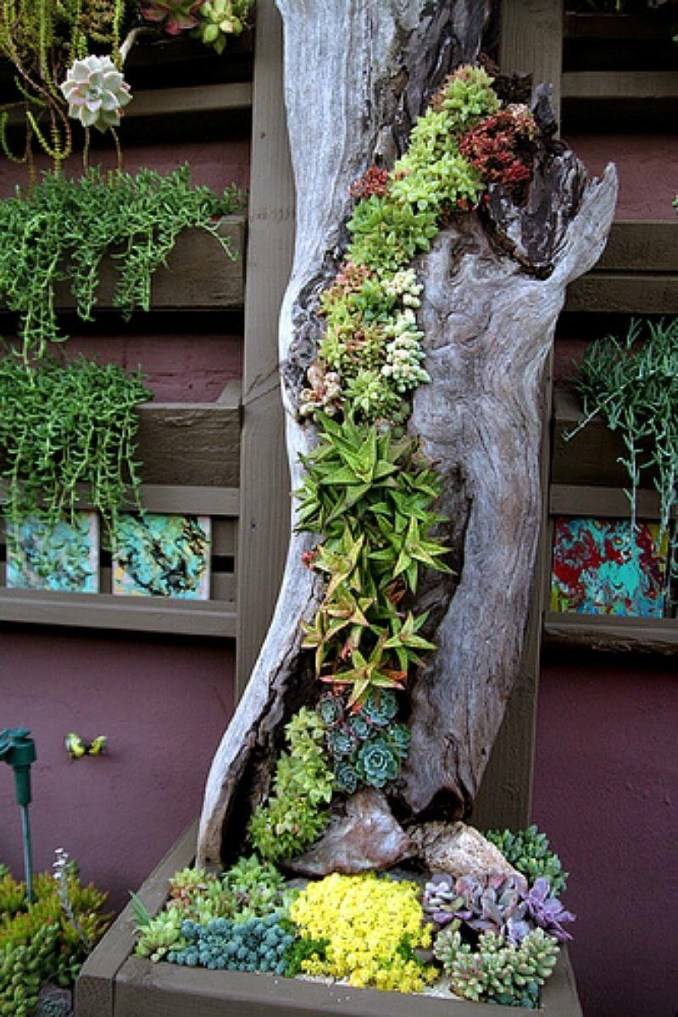 50 Best Succulent Garden Ideas for 2020